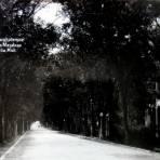 Bosque Cuahutemoc & Ave Justo Mendoza.