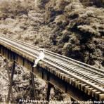 Ferrocarril mexicano Por el Fotógrafo Hugo Brehme ( Circulada el 3 de Febrero de 1937 ).