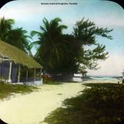 Escena tropical Progreso, Yucatán.