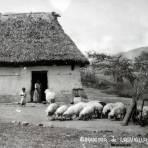 Alrrededor de Lagunillas Michoacán.