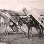 Tipos mexicanos arrieros cargando madera.