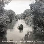 Un Manglar Laguna de Puerto Marquez.