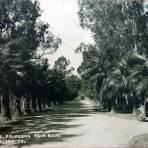 Calle de Las Palmeras Agua Azul. ( Circulada el 19 de Mayo de 1939 ).