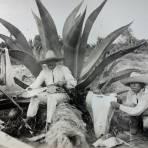 Tipos Mexicanos sacando la fibra del maguey.