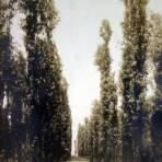 Xochimilco una Chinampa por el  Fotógrafo Felix Miret ( Circulada el 20de mayo de 1910 ).