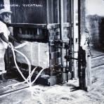 Procesando el Henequen. - Industria, Economía y Cultura