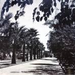 Boulevard Morelos.