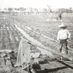 Regando los campos freseros ( Fechada en 1927 ).