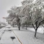 Boulevard Gómez Morín, Cd Delicias Chihuahua bajo la nieve.