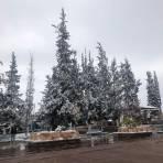 Plaza del Santuario, Cd Delicias con nieve. ( @adri_moy )