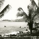Detalle tropical de Puerto Vallarta