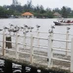Estero Casitas